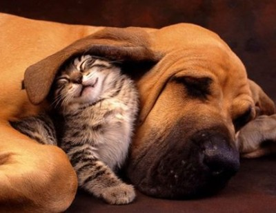 Kitten and puppy hug